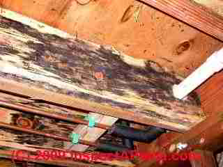Photograph: typical cosmetic bluestain mold on new framing lumber, floor joists - © Daniel Friedman
