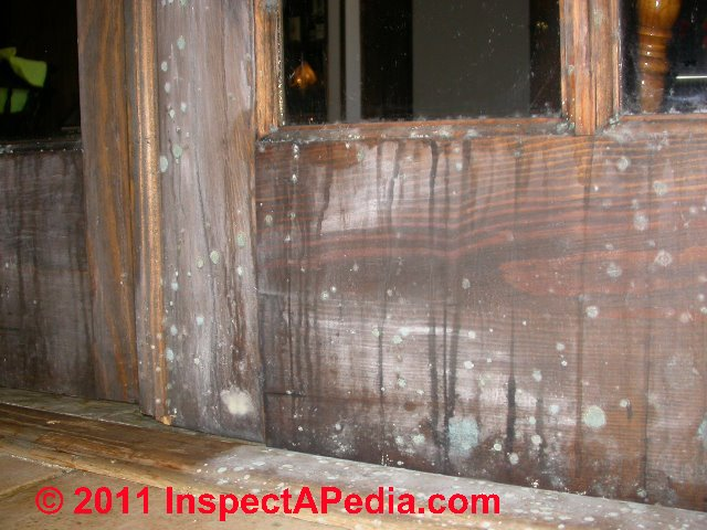 Photographic Guide To Mold On Computers Moldy Concrete