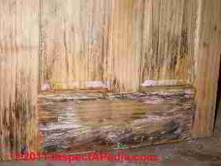 Photo of mold on a solid wood six panel pine door (C) Daniel Friedman