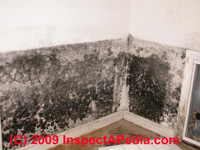 Interrupted Mold Growth Pattern On Building Drywall Why Does Sometimes Stop In Straight Lines
