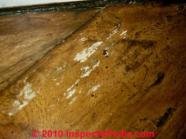 Guide To Cleaning Mold Off Of Wood Flooring