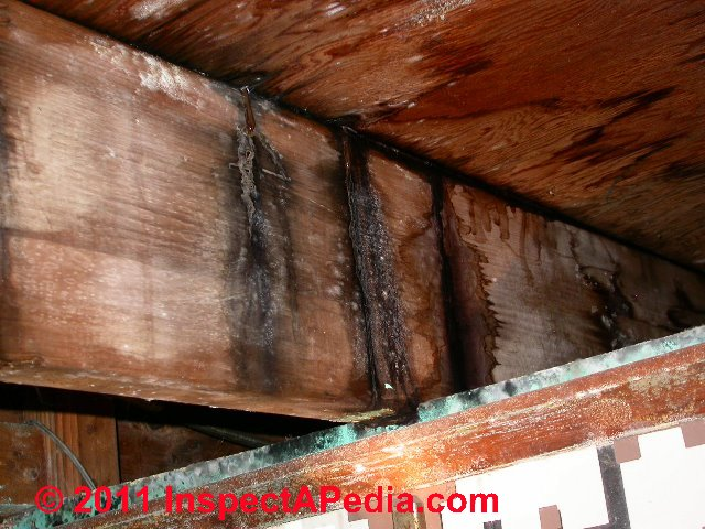 Mold Commonly Found In Indoor Dust Samples Mold On