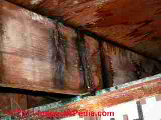 Black mold and leak stains on floor joists and water stains on subfloor (C) Daniel Friedman