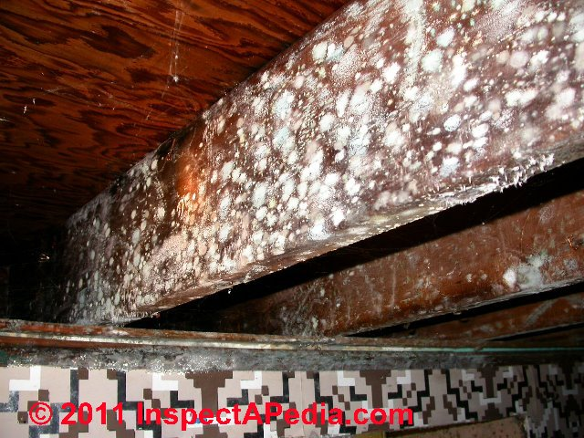 White Fungus On Wood Beams Images