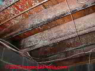 Very mold contaminated floor framing and subfloor (C) D Friedman