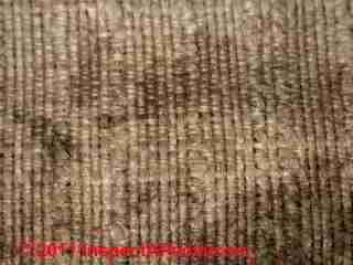 Black mold on canvas clothing or bag (C) Daniel Friedman
