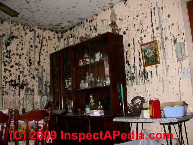 List Of Mold Related Illnesses Health Complaints
