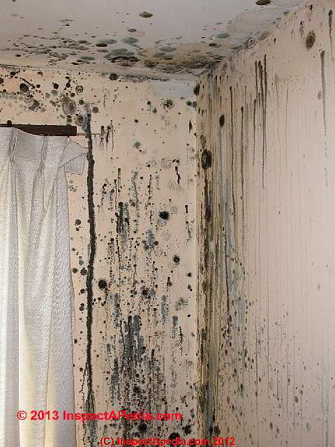 Mold Should We Be Trying To Kill