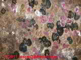 Mold and yeast in dense contamination on drywall in a home(C) Daniel Friedman