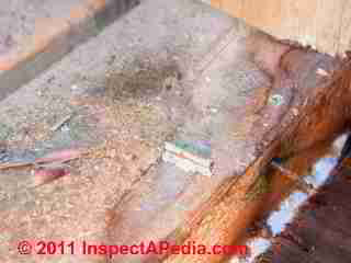 Photo of mold on modular home wall cavity surfaces (C) Daniel Friedman