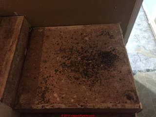 Identify Harmless Black Mold Faqs Q Amp A On Recognizing