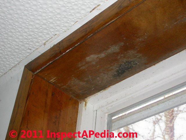how to kill mold on windows