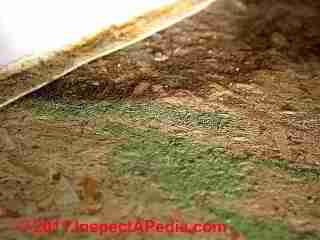 Photo of mold on OSB or fiberboard floor underlayment  (C) Daniel Friedman