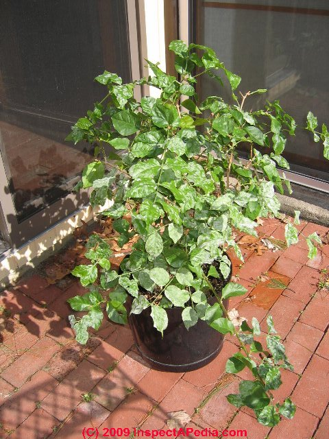 House plant identification image search results - House plant identification guide by picture ...