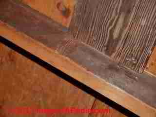 What Mold Looks Like What Harmless Mold Looks Like Stuff