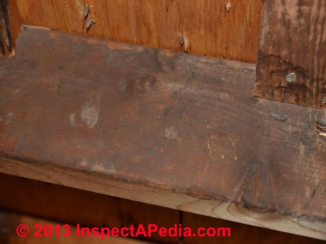 Black Spots On Floor Joists Carpet Vidalondon