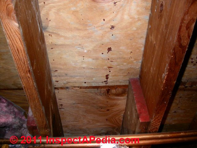 Photos Of Mold On Shoes Mold On Vinyl Siding Mold On