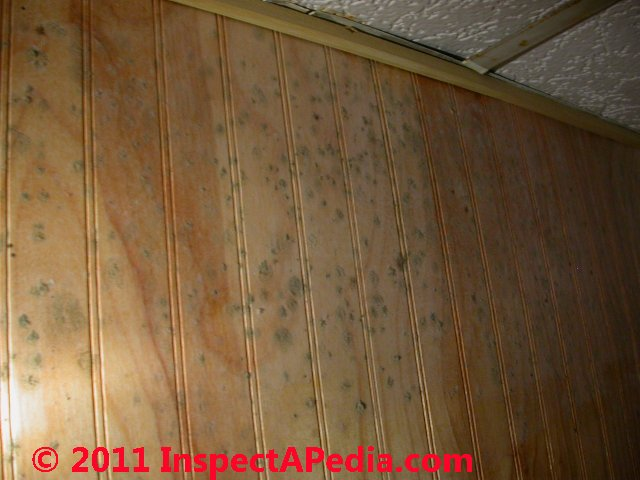 Mold On Fruit Around The House Such As Oranges Mold On
