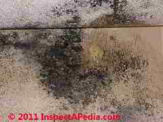Photo of mold on  wallpaper (C) Daniel Friedman