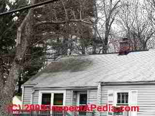 how to clean moss off asphalt roof shingles
