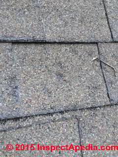 Asphalt shingle hail damage, scouring, granule loss (C) InspectApedia NY