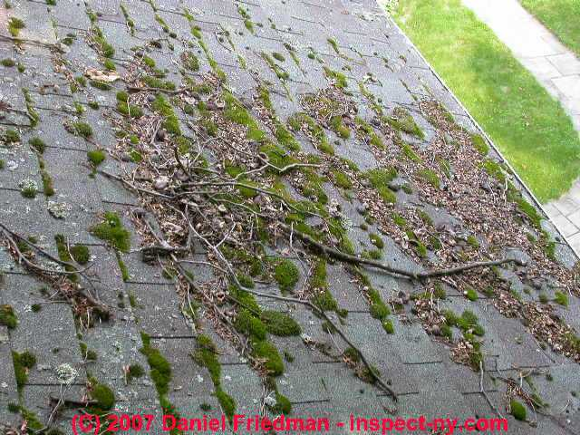 Moss On Roofs Causes Cure Prevention Of Moss Algae
