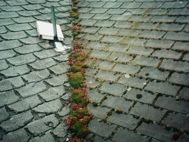 how to clean off mossy or lichens covered roofs - How To Kill Moss On Roof