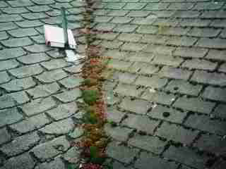 Clean Algae Stains On Roofs Cleaning Amp Prevention Of