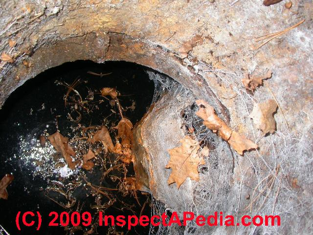 Septic System Test Amp Inspection How To Guide