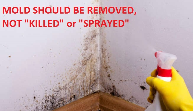 Mold  IAQ Hazard Advice for Rental Tenants - What to Do About a