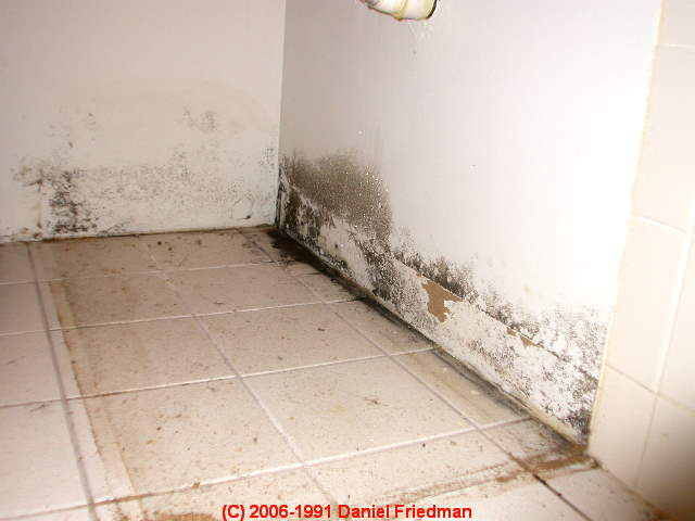 How To Find Hidden Mold Contamination How To Find And