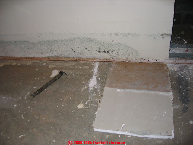 A table of the most common indoor molds found in buildings for Gypsum board asbestos