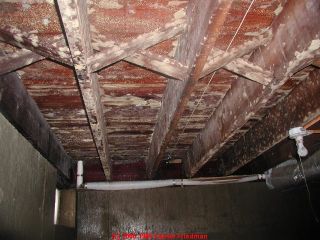 How To Clean Mold On Building Framing Lumber Or Plywood