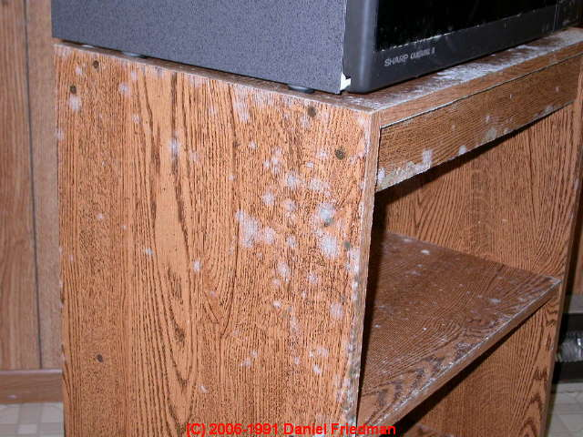 Find Light Colored Mold Contamination How To Find Test