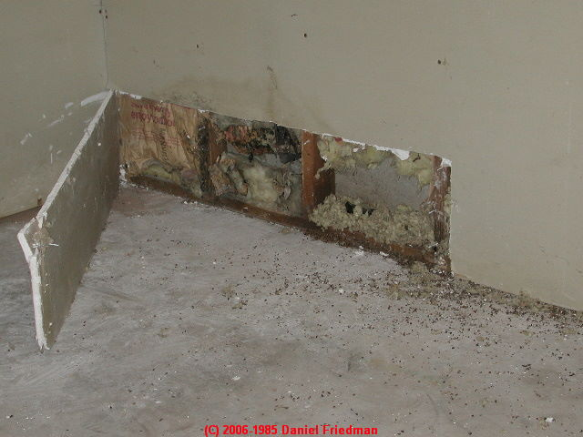 Photograph Leak Stains Prompted A Wall Cut To Disclose Very Moldy Insulation And Mold On