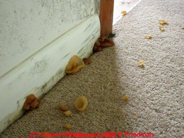 Household Mold Mushrooms Gallery