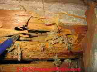 Carpenter Ant Damaged Wood C Daniel Friedman