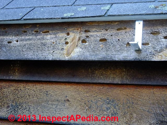 Carpenter Bee Entry Exit Holes In Building Wood Trim Or Wooden Structural Members