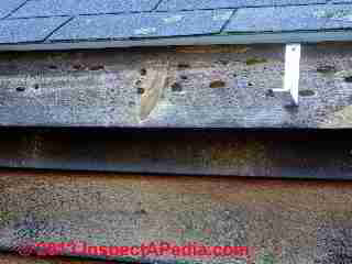 Carpenter bee damage to a fascia board (C) Daniel Friedman