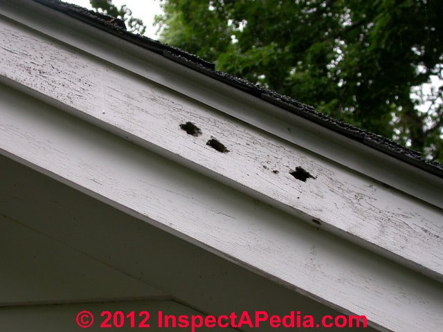 Carpenter Bee Management Options How To Identify