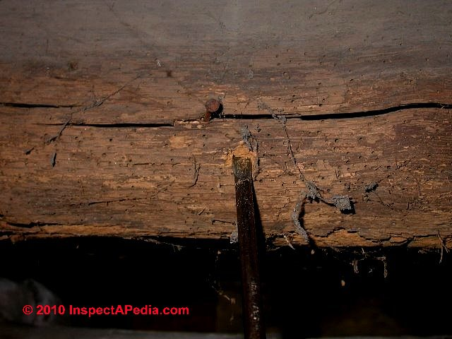 Powder Post Beetles Amp Old House Borers Structural Damage