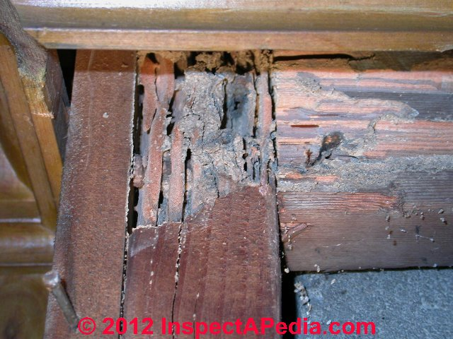 Termites Photo Guide To Termites How To Identify