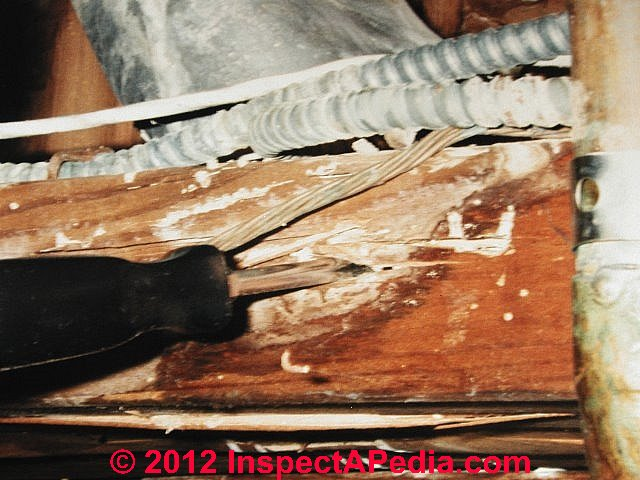 how to get rid of termites in ceiling